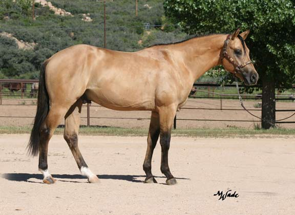 Buckskin%20horse-MJG-Hollywoodroostin-right