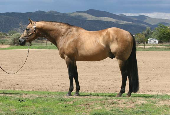 "Scottish Bart 4-28-1984 ~ 4-17-2015 photo taken 8-18-14 Age 30 It is with tremendous sorrow that we lost Scottish Bart today. 4-17-2015 It is an end of an era that the Southwest's finest buckskin stallion has passed on to the Rainbow Bridge. ""Somewhere in times own space, there must be some sweet pastured place, where creeks sing on and tall trees grow, some paradise where horses go. For by the love that guides my pen, I know great horses live again..."""